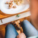 Como adestrar seu cachorro: tudo o que você precisa saber
